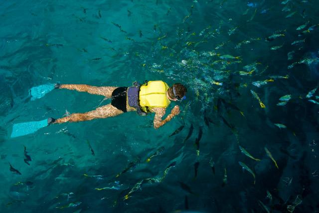 Australia Great Barrier Reef Snorkel