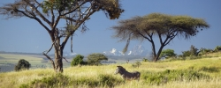 Lewa Wildlife Conservancy added to UNESCO World Heritage list