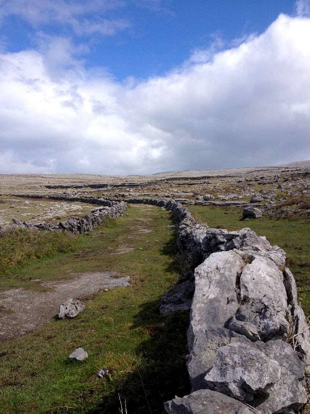 Vegetation at the Burren