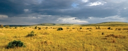 4 Kenyan wildlife & conservation organizations