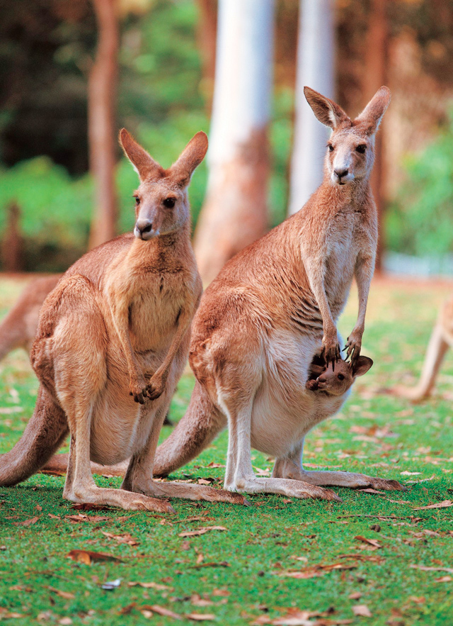 6 unique animals of australia ef go ahead tours travel blog