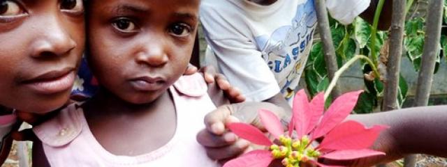 Rose of Charity, Zimbabwe