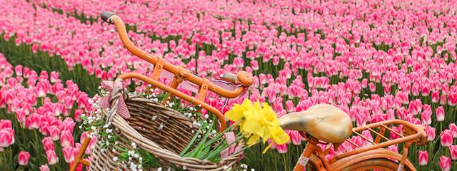 Bike in flower fields at Keukenhof Gardens outside Amsterdam