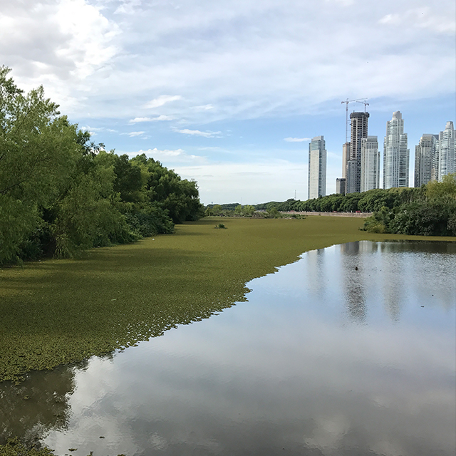 Buenos Aires Costanera Sur Ecological Reserve