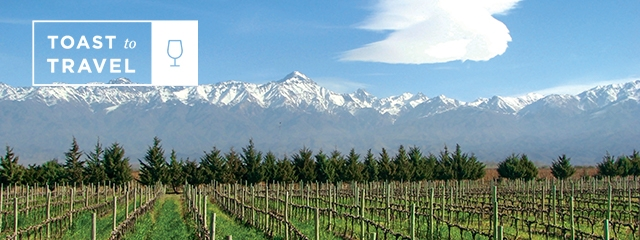Vineyard in South America