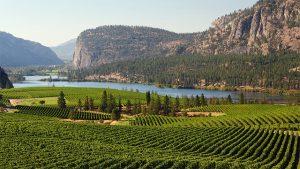 Okanagan Valley vineyard, British Columbia, Canada