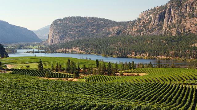 Okanagan Valley vineyard, British Columbia, Canada