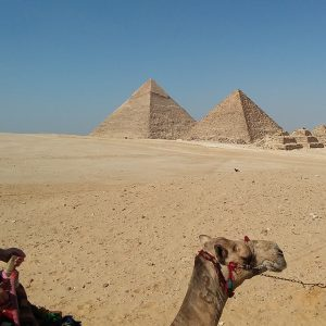 A camel at the bottom of the frame with the pyramids in the background against a blue sky.