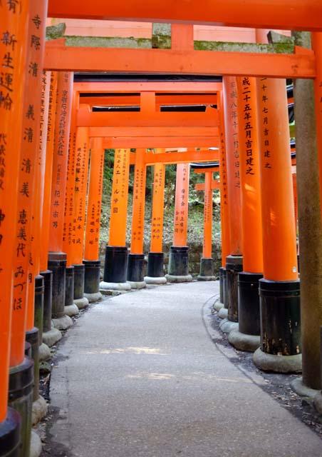 A pathway leading through orange gates with Japanese writing on the pillars