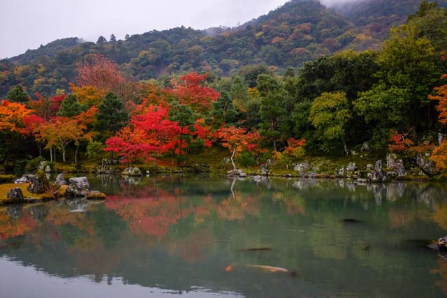 A lake filled with koi fish that is surrounded by trees with autumn foliage and a mountain