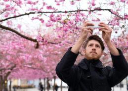 Amtrak it to the Cherry Blossom Festival. We've got the lowdown on what's trending in D.C.