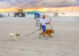4 reasons Miami is the best city to travel with your puppy