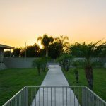Walkway lined with palm trees and grass with a sunset in lighting the sky at dusk.