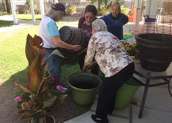 Residents planting flowers together in large decorative pots.