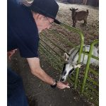 resident feeding a goat