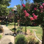 Walking path with blooming trees, light posts and park benches for resting