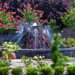Water feature with rose bushes and plants surrounding it