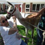 resident petting an alpaca