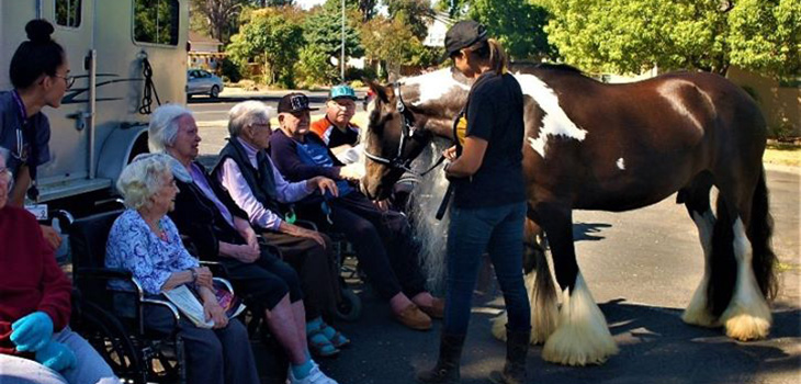 residents meeting a horse