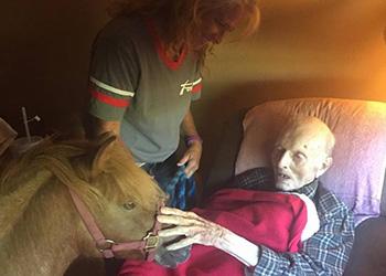 elderly man greeting a pony