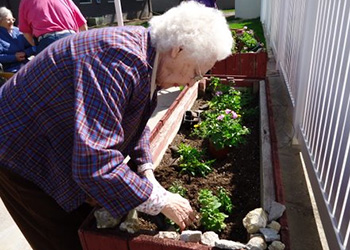 resident planting a garden
