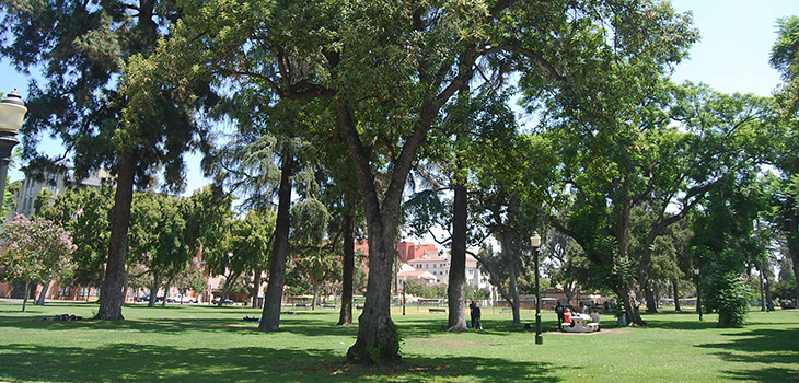 Park with trees, walking paths and lush grass