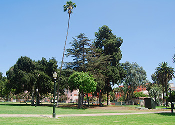 City Park with many trees of various types