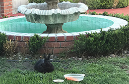 Fountain with a bunny in front of it at Casitas Care Center