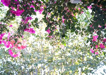 flowers draping