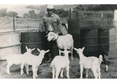 Fred Nieblas on his ranch and with some of the goats he raised. His bbq goats were very popular and graced many a dinner table at San Juan Capistrano family gatherings/bbq. Everyone in town liked Fred – he had a great personality! He also raised rabbits and chickens and sold them. He was known for raising quality stock.  Notice the background in the photo. That is now all Casper's Regional Park area. His ranch bordered the west side of what is now Casper's. It was beautiful and full of wildlife of every kind.
