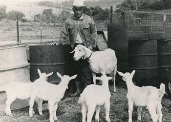 Fred Nieblas on his ranch and with some of the goats he raised. His bbq goats were very popular and graced many a dinner table at San Juan Capistrano family gatherings/bbq. Everyone in town liked Fred – he had a great personality! He also raised rabbits and chickens and sold them. He was known for raising quality stock.