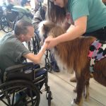 Miniature horses visiting residents.
