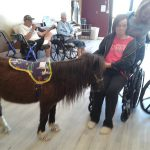 Miniature horse visiting residents.