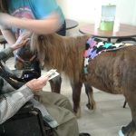 A miniature horse visiting residents.
