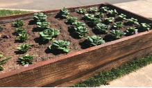 A Planter With Plants Coming Through The Soil.