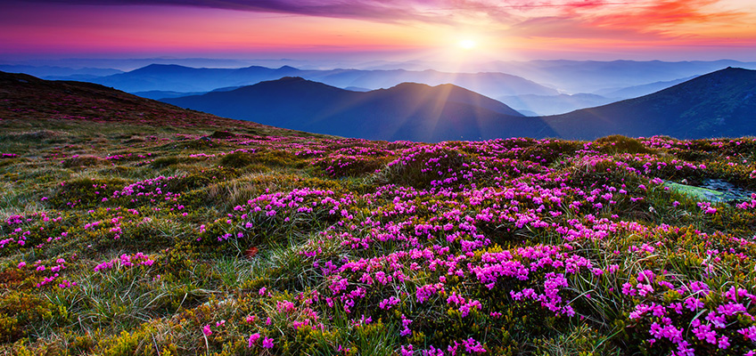 A meadow filled with beautiful blooming flowers and the sun shinning on the mountains in the horizon