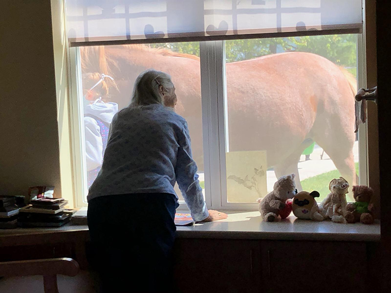 A resident looking at the horses through her window.