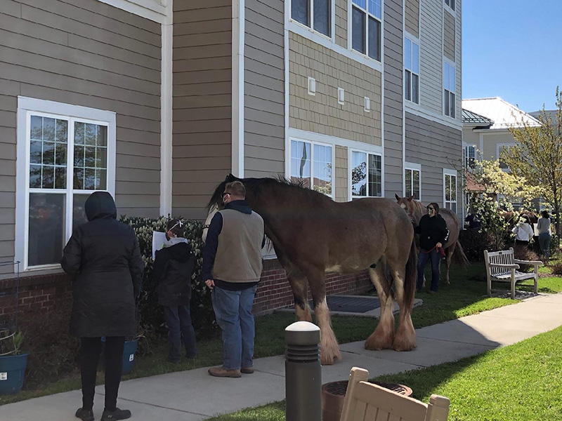 Residents being visited by Clydesdale horses and their owners.