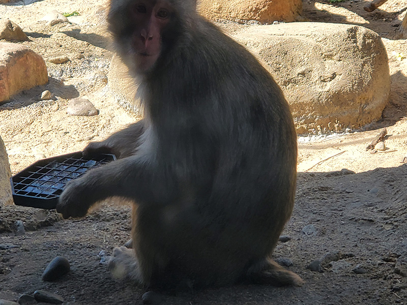 Visiting the monkeys at the zoo