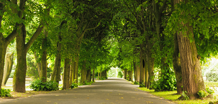 long tree-lined road
