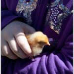baby chick visiting for the egg hunt