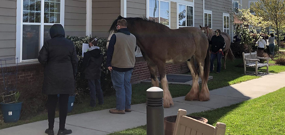 Horses Visiting Residents