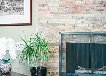 indoor plant next to a fireplace