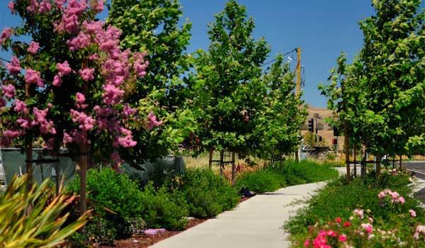 trees on a walkway