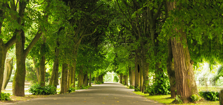 road in between a row of dense trees