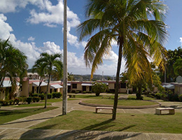 palm trees and beautiful sky
