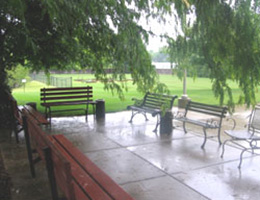 four outdoor benches sitting under a large tree on a rainy day