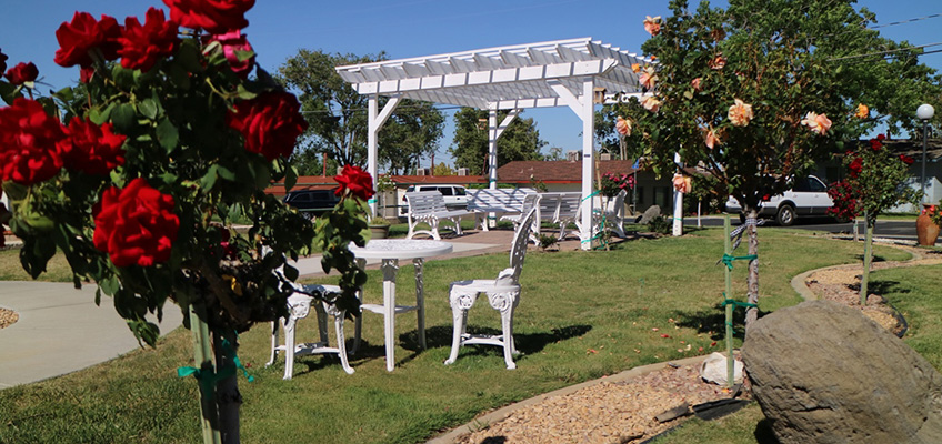 Outside seating under a pergola with rose bushes near by.