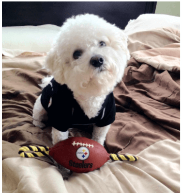 Steelers Puppy