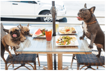 Dogs Sitting At Table